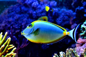 colorful_fish_in_the_aquarium_by_xbiscuits-d41telx.jpg
